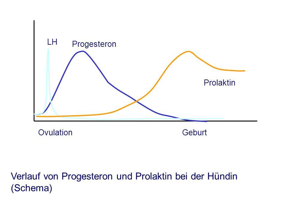 OvulationGeburt Progesteron LH Prolaktin Verlauf von Progesteron und Prolaktin bei der Hündin (Schema)