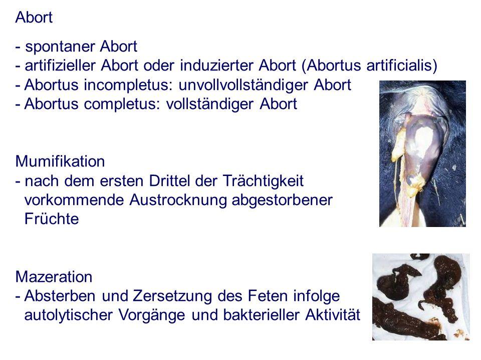 Abort - spontaner Abort - artifizieller Abort oder induzierter Abort (Abortus artificialis) - Abortus incompletus: unvollvollständiger Abort - Abortus completus: vollständiger Abort Mumifikation - nach dem ersten Drittel der Trächtigkeit vorkommende Austrocknung abgestorbener Früchte Mazeration - Absterben und Zersetzung des Feten infolge autolytischer Vorgänge und bakterieller Aktivität