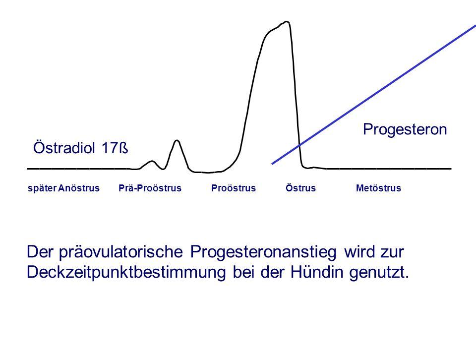 Östradiol 17ß später Anöstrus Prä-Proöstrus Proöstrus Östrus Metöstrus Progesteron Der präovulatorische Progesteronanstieg wird zur Deckzeitpunktbestimmung bei der Hündin genutzt.