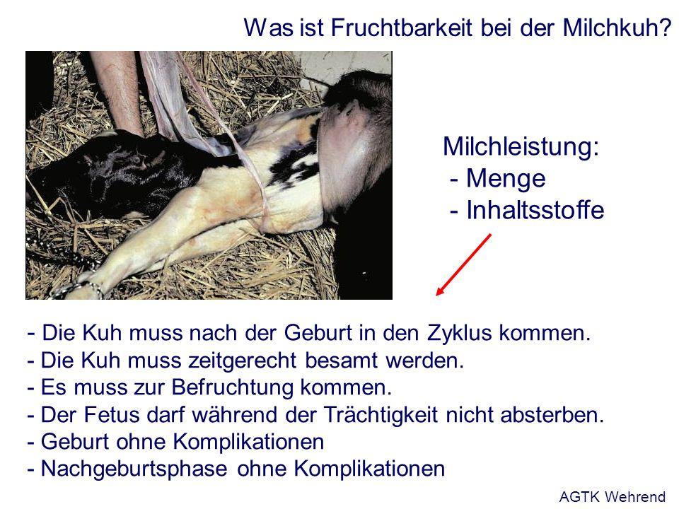 Was ist Fruchtbarkeit bei der Milchkuh. - Die Kuh muss nach der Geburt in den Zyklus kommen.