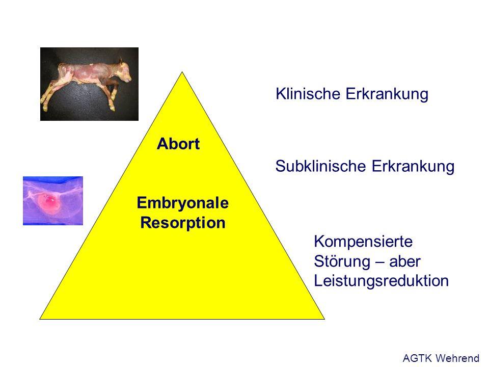 Klinische Erkrankung Subklinische Erkrankung Kompensierte Störung – aber Leistungsreduktion Abort Embryonale Resorption AGTK Wehrend
