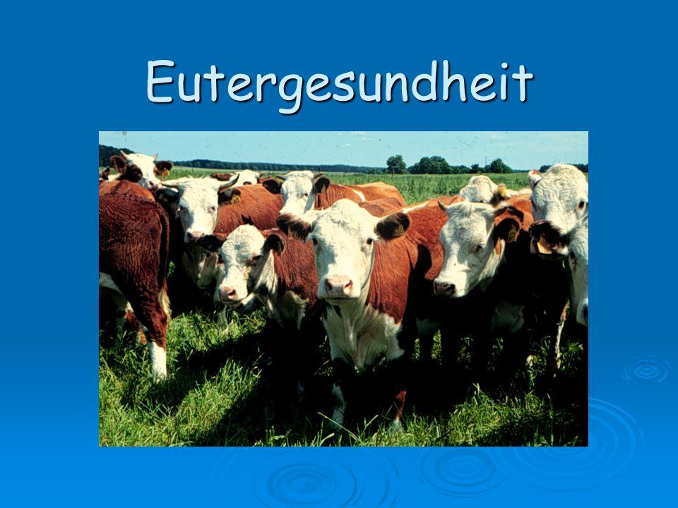 AGTK-2005-Eutergesundheit62 Keimgehalt in der Milch (Keimzahl) Keimgehalt beim Verlassen des Euters Keimgehalt beim Verlassen des Euters - gesundes Euter: < 10.000 Keime/ml - subklinisch erkranktes Euter: selten über 20.000 Keime/ml selten über 20.000 Keime/ml