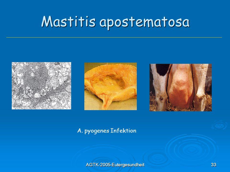 AGTK-2005-Eutergesundheit33 Mastitis apostematosa A. pyogenes Infektion