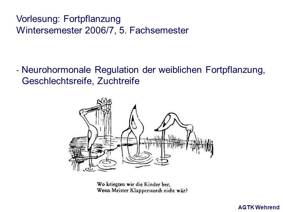 AGTK Wehrend Vorlesung: Fortpflanzung Wintersemester 2006/7, 5. Fachsemester - Neurohormonale Regulation der weiblichen Fortpflanzung, Geschlechtsreif