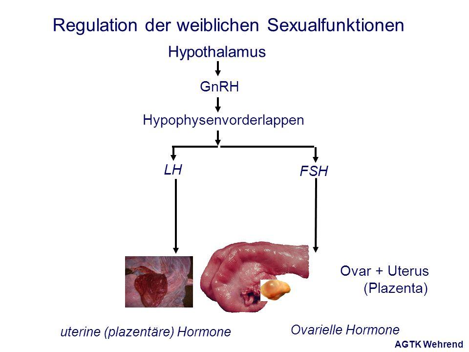 AGTK Wehrend Regulation der weiblichen Sexualfunktionen Hypothalamus Hypophysenvorderlappen GnRH LH FSH Ovar + Uterus (Plazenta) Ovarielle Hormone uterine (plazentäre) Hormone