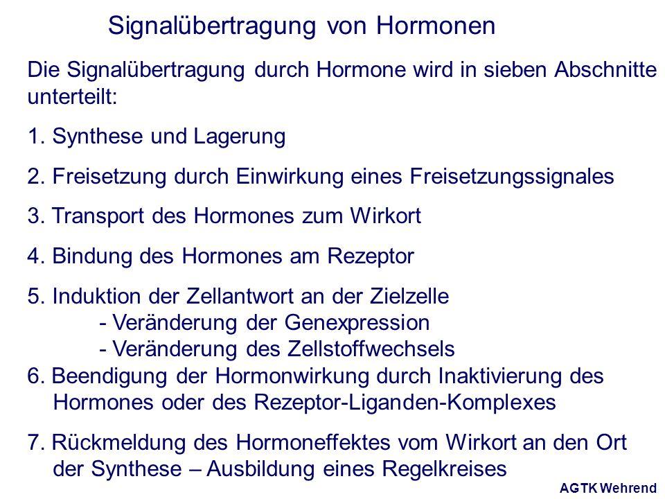 AGTK Wehrend Signalübertragung von Hormonen Die Signalübertragung durch Hormone wird in sieben Abschnitte unterteilt: 1. Synthese und Lagerung 2. Frei