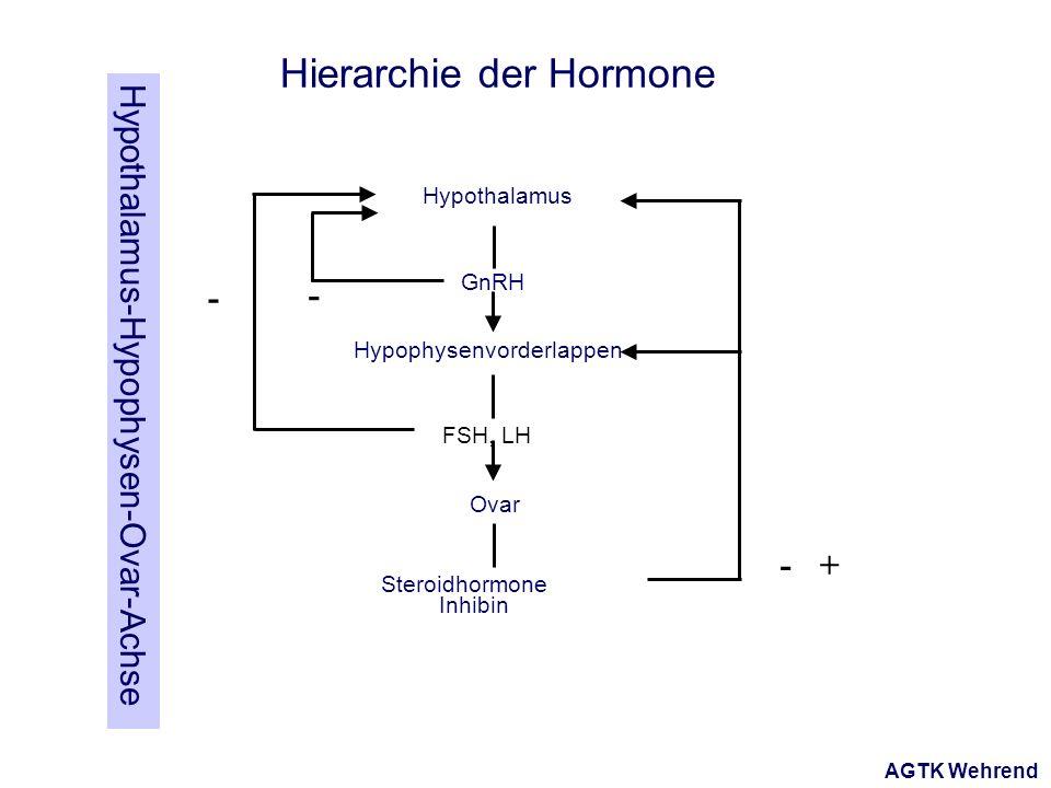 AGTK Wehrend Hypothalamus Hypophysenvorderlappen Ovar FSH, LH GnRH Steroidhormone Inhibin - - -+ Hierarchie der Hormone Hypothalamus-Hypophysen-Ovar-Achse