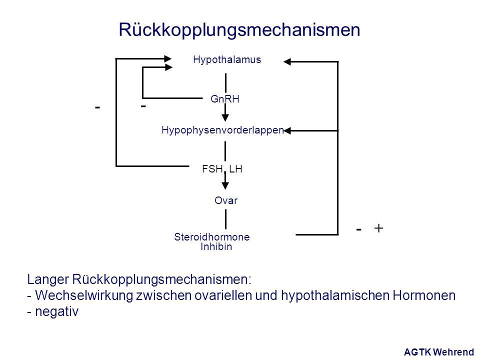 AGTK Wehrend Hypothalamus Hypophysenvorderlappen Ovar FSH, LH GnRH Steroidhormone Inhibin - - -+ Rückkopplungsmechanismen Langer Rückkopplungsmechanismen: - Wechselwirkung zwischen ovariellen und hypothalamischen Hormonen - negativ