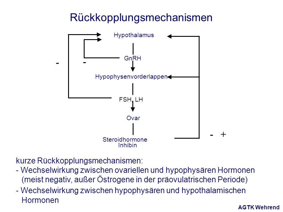 AGTK Wehrend Hypothalamus Hypophysenvorderlappen Ovar FSH, LH GnRH Steroidhormone Inhibin - - -+ Rückkopplungsmechanismen kurze Rückkopplungsmechanismen: - Wechselwirkung zwischen ovariellen und hypophysären Hormonen (meist negativ, außer Östrogene in der präovulatrischen Periode) - Wechselwirkung zwischen hypophysären und hypothalamischen Hormonen