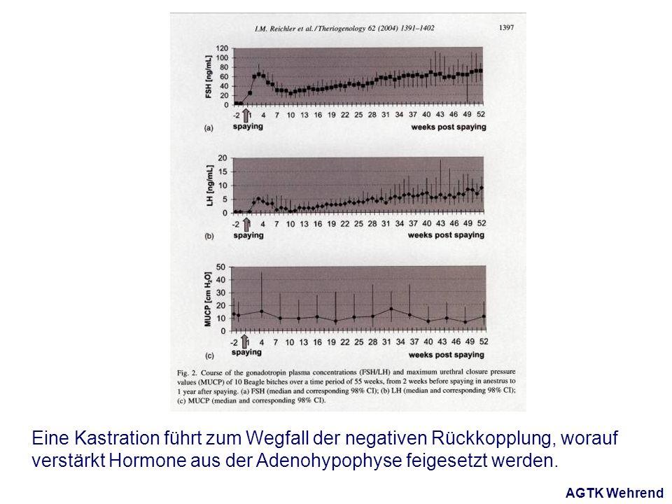 AGTK Wehrend Eine Kastration führt zum Wegfall der negativen Rückkopplung, worauf verstärkt Hormone aus der Adenohypophyse feigesetzt werden.