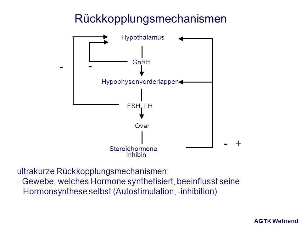 AGTK Wehrend Hypothalamus Hypophysenvorderlappen Ovar FSH, LH GnRH Steroidhormone Inhibin - - -+ Rückkopplungsmechanismen ultrakurze Rückkopplungsmechanismen: - Gewebe, welches Hormone synthetisiert, beeinflusst seine Hormonsynthese selbst (Autostimulation, -inhibition)