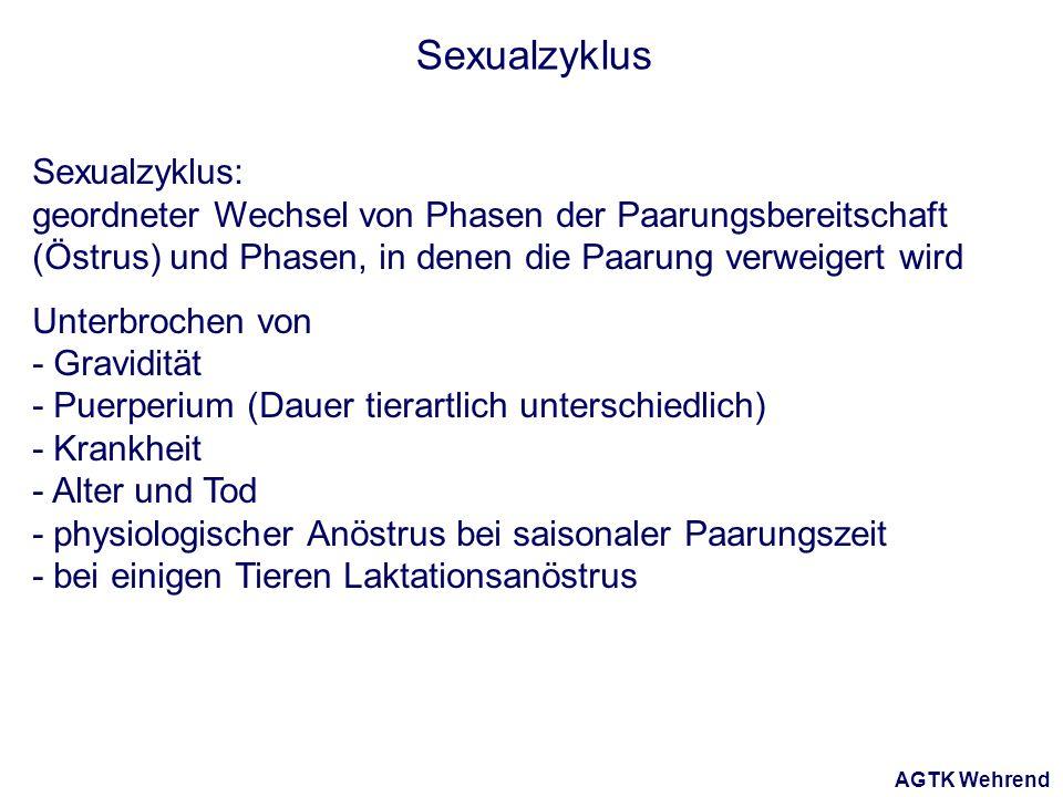 AGTK Wehrend Sexualzyklus Sexualzyklus: geordneter Wechsel von Phasen der Paarungsbereitschaft (Östrus) und Phasen, in denen die Paarung verweigert wird Unterbrochen von - Gravidität - Puerperium (Dauer tierartlich unterschiedlich) - Krankheit - Alter und Tod - physiologischer Anöstrus bei saisonaler Paarungszeit - bei einigen Tieren Laktationsanöstrus