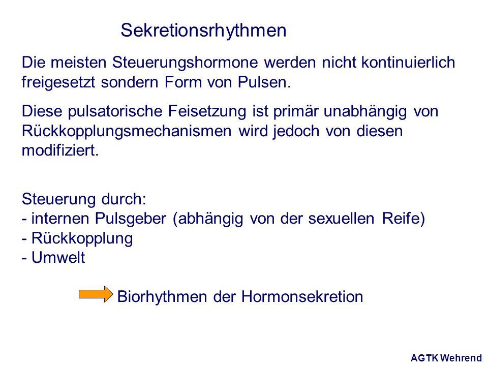 AGTK Wehrend Sekretionsrhythmen Die meisten Steuerungshormone werden nicht kontinuierlich freigesetzt sondern Form von Pulsen.