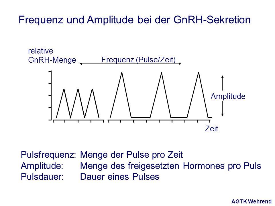 AGTK Wehrend Amplitude Frequenz (Pulse/Zeit) Zeit relative GnRH-Menge Frequenz und Amplitude bei der GnRH-Sekretion Pulsfrequenz: Menge der Pulse pro Zeit Amplitude: Menge des freigesetzten Hormones pro Puls Pulsdauer: Dauer eines Pulses