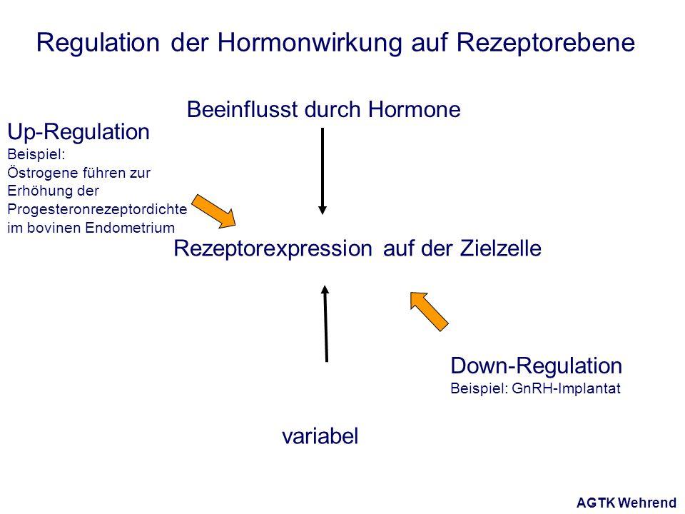 AGTK Wehrend Regulation der Hormonwirkung auf Rezeptorebene Rezeptorexpression auf der Zielzelle Beeinflusst durch Hormone variabel Down-Regulation Beispiel: GnRH-Implantat Up-Regulation Beispiel: Östrogene führen zur Erhöhung der Progesteronrezeptordichte im bovinen Endometrium