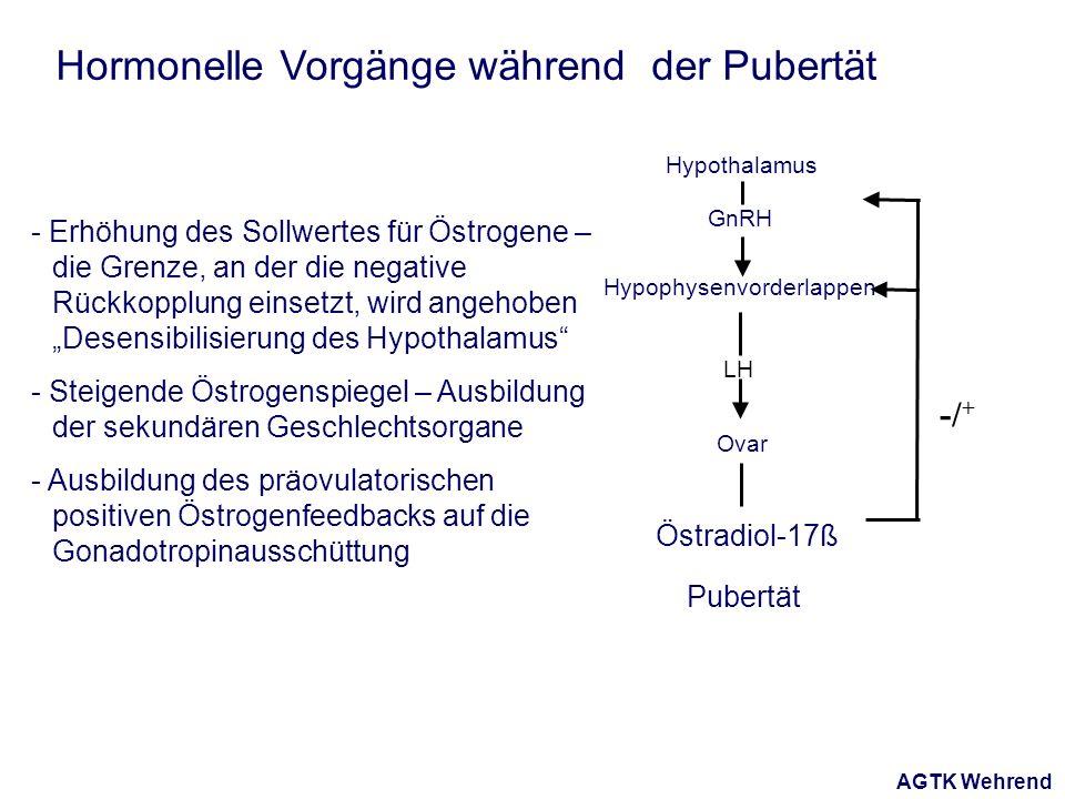 AGTK Wehrend Hormonelle Vorgänge während der Pubertät - Erhöhung des Sollwertes für Östrogene – die Grenze, an der die negative Rückkopplung einsetzt, wird angehoben Desensibilisierung des Hypothalamus - Steigende Östrogenspiegel – Ausbildung der sekundären Geschlechtsorgane - Ausbildung des präovulatorischen positiven Östrogenfeedbacks auf die Gonadotropinausschüttung Hypophysenvorderlappen Hypothalamus Ovar LH GnRH Östradiol-17ß -/ + Pubertät