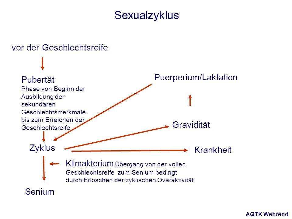 AGTK Wehrend Sexualzyklus vor der Geschlechtsreife Pubertät Phase von Beginn der Ausbildung der sekundären Geschlechtsmerkmale bis zum Erreichen der Geschlechtsreife Zyklus Senium Klimakterium Übergang von der vollen Geschlechtsreife zum Senium bedingt durch Erlöschen der zyklischen Ovaraktivität Gravidität Puerperium/Laktation Krankheit