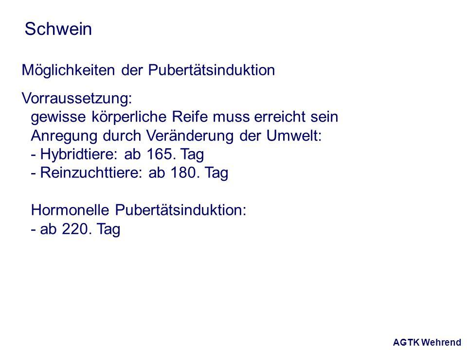 AGTK Wehrend Schwein Möglichkeiten der Pubertätsinduktion Vorraussetzung: gewisse körperliche Reife muss erreicht sein Anregung durch Veränderung der Umwelt: - Hybridtiere: ab 165.
