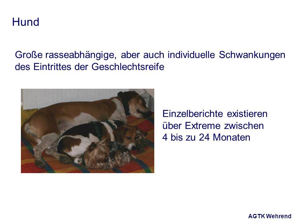 AGTK Wehrend Hund Große rasseabhängige, aber auch individuelle Schwankungen des Eintrittes der Geschlechtsreife Einzelberichte existieren über Extreme zwischen 4 bis zu 24 Monaten