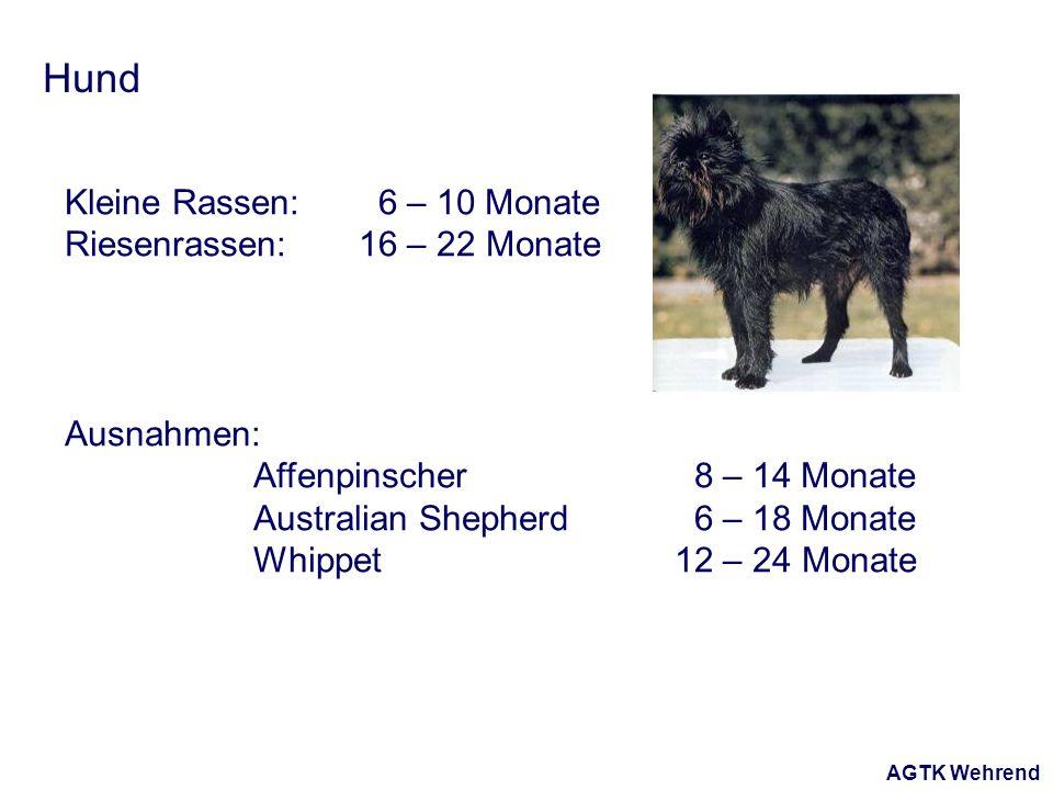 AGTK Wehrend Hund Kleine Rassen: 6 – 10 Monate Riesenrassen: 16 – 22 Monate Ausnahmen: Affenpinscher 8 – 14 Monate Australian Shepherd 6 – 18 Monate Whippet 12 – 24 Monate