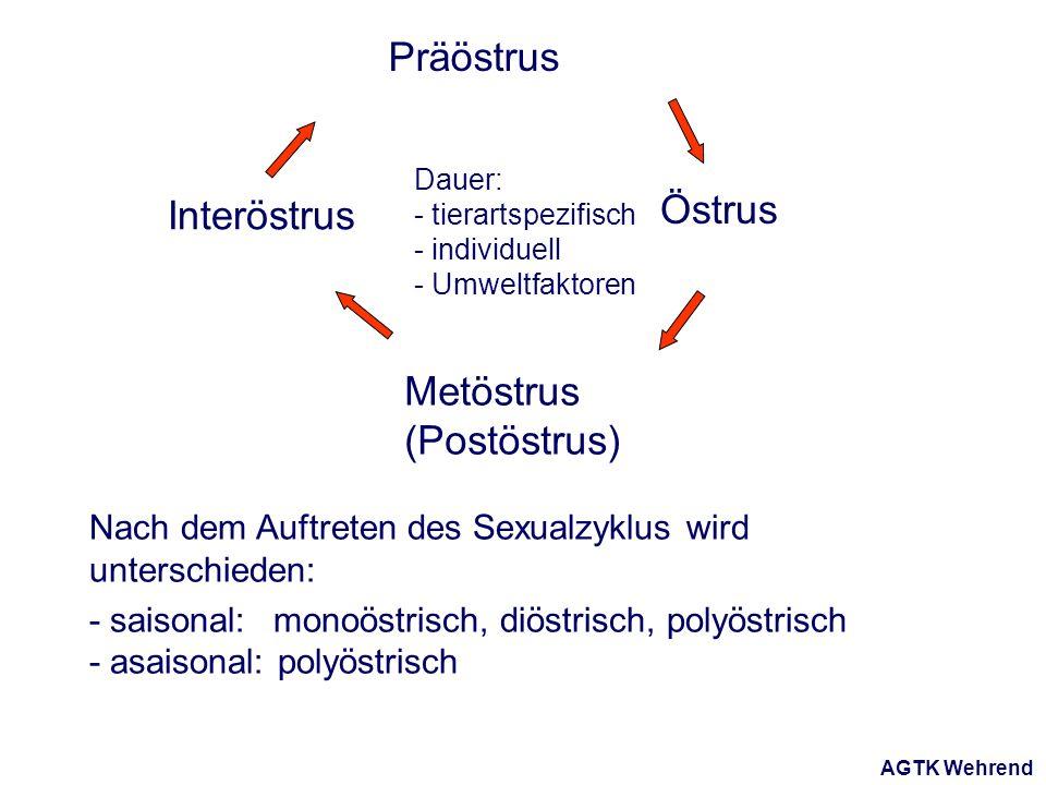 AGTK Wehrend Nach dem Auftreten des Sexualzyklus wird unterschieden: - saisonal: monoöstrisch, diöstrisch, polyöstrisch - asaisonal: polyöstrisch Präöstrus Östrus Metöstrus (Postöstrus) Interöstrus Dauer: - tierartspezifisch - individuell - Umweltfaktoren