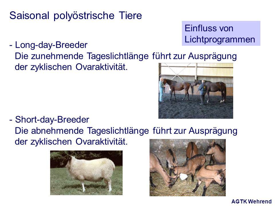 AGTK Wehrend Saisonal polyöstrische Tiere - Long-day-Breeder Die zunehmende Tageslichtlänge führt zur Ausprägung der zyklischen Ovaraktivität. - Short