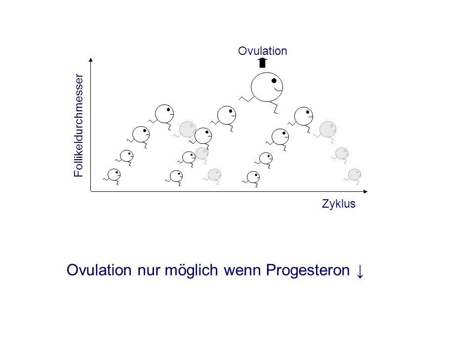 Ovulation nur möglich wenn Progesteron Ovulation Follikeldurchmesser Zyklus