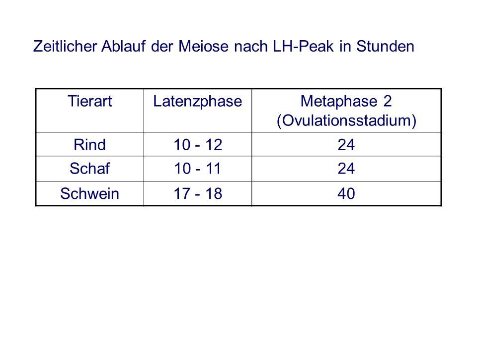 Zeitlicher Ablauf der Meiose nach LH-Peak in Stunden TierartLatenzphaseMetaphase 2 (Ovulationsstadium) Rind10 - 1224 Schaf10 - 1124 Schwein17 - 1840