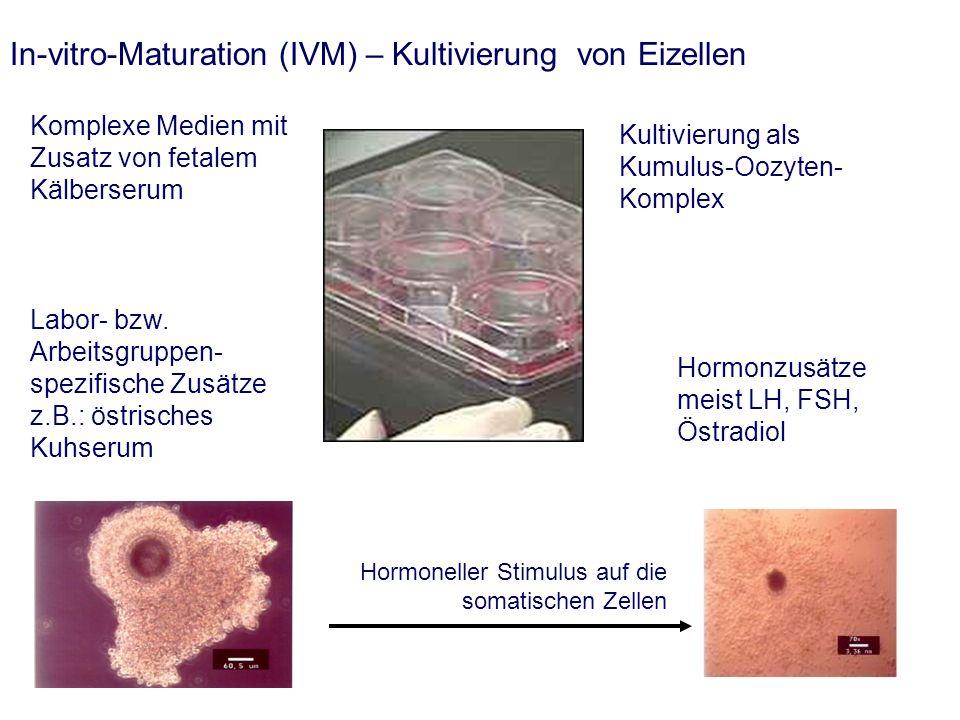 In-vitro-Maturation (IVM) – Kultivierung von Eizellen Kultivierung als Kumulus-Oozyten- Komplex Komplexe Medien mit Zusatz von fetalem Kälberserum Hormonzusätze meist LH, FSH, Östradiol Labor- bzw.