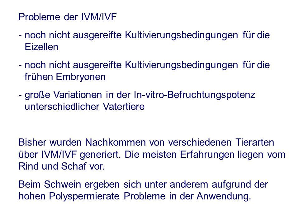 Probleme der IVM/IVF - noch nicht ausgereifte Kultivierungsbedingungen für die Eizellen - noch nicht ausgereifte Kultivierungsbedingungen für die frühen Embryonen - große Variationen in der In-vitro-Befruchtungspotenz unterschiedlicher Vatertiere Bisher wurden Nachkommen von verschiedenen Tierarten über IVM/IVF generiert.