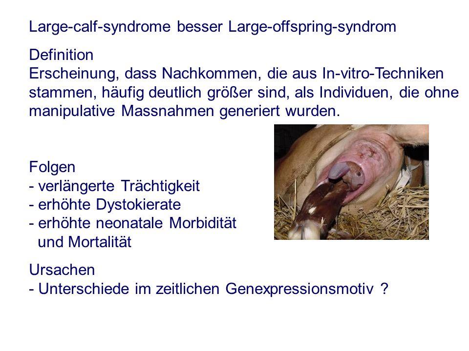 Large-calf-syndrome besser Large-offspring-syndrom Definition Erscheinung, dass Nachkommen, die aus In-vitro-Techniken stammen, häufig deutlich größer