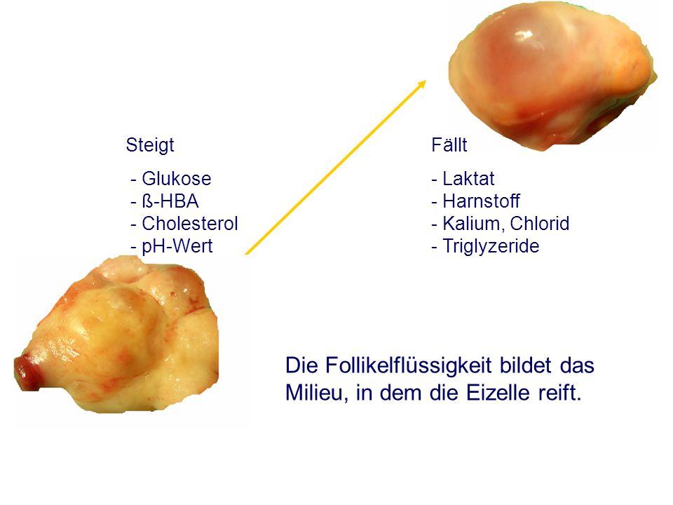 Die Follikelflüssigkeit bildet das Milieu, in dem die Eizelle reift.