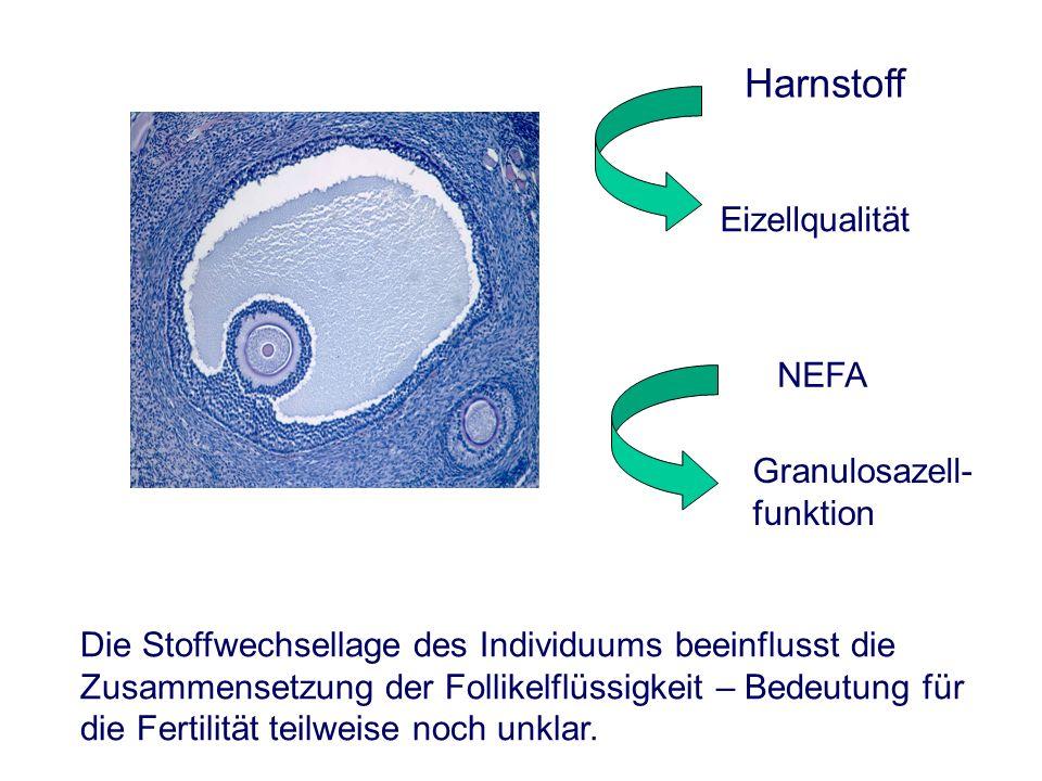 Harnstoff NEFA Eizellqualität Granulosazell- funktion Die Stoffwechsellage des Individuums beeinflusst die Zusammensetzung der Follikelflüssigkeit – Bedeutung für die Fertilität teilweise noch unklar.