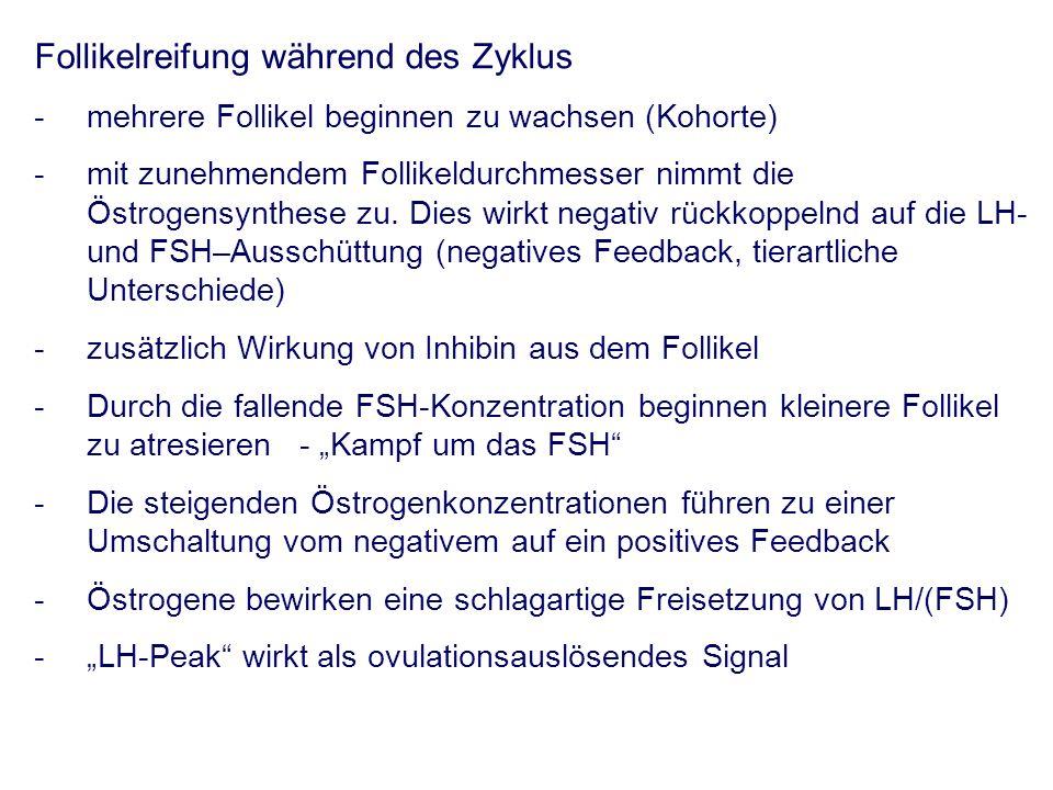 LH-Peak Elektrische Stimulation Chemikalien Ovulation: Eizelle im 2.