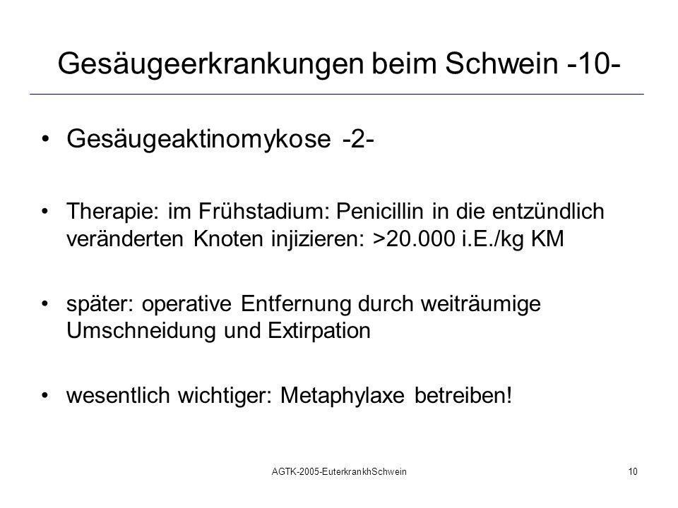 AGTK-2005-EuterkrankhSchwein10 Gesäugeerkrankungen beim Schwein -10- Gesäugeaktinomykose -2- Therapie: im Frühstadium: Penicillin in die entzündlich v