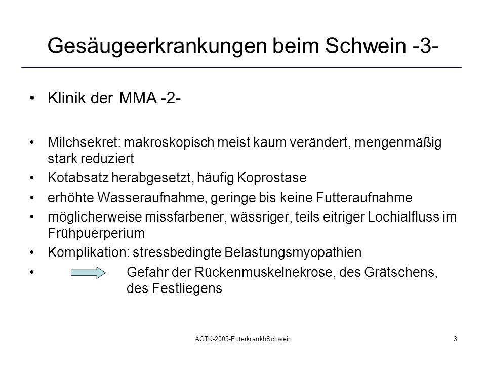 AGTK-2005-EuterkrankhSchwein4 Gesäugeerkrankungen beim Schwein -4- Pathogenese der MMA -1- hämatogene Infektion: offenbar dominierend: lymphogene Infektion: offenbar dominierend: galaktogene Infektion: häufig nur einzelne Mammarkomplexe erkrankt fördernde Faktoren: Geburtsstress: Abwehr herabgesetzt, Immunsuppression verzögerter Geburtsverlauf, verlängerte Geburtsdauer Koprostase ante/intra partum Mängel in der Haltungsform,- hygiene mangelhafte Hygiene bei geburtshilflichen Eingriffen Verletzungen, Quetschungen Darm, Geburtsweg Akutwerden persistierender, chronischer Infektionen (Zystitis, Urethritis) gesamtes Gesäuge betroffen