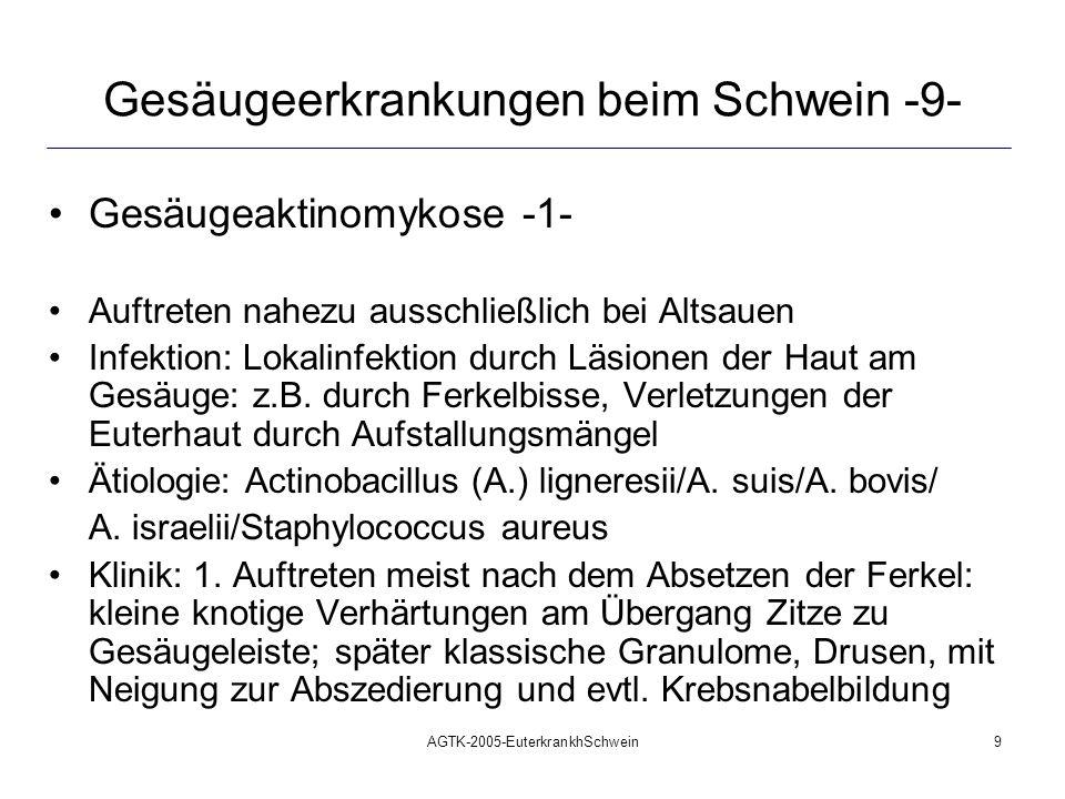 AGTK-2005-EuterkrankhSchwein10 Gesäugeerkrankungen beim Schwein -10- Gesäugeaktinomykose -2- Therapie: im Frühstadium: Penicillin in die entzündlich veränderten Knoten injizieren: >20.000 i.E./kg KM später: operative Entfernung durch weiträumige Umschneidung und Extirpation wesentlich wichtiger: Metaphylaxe betreiben!