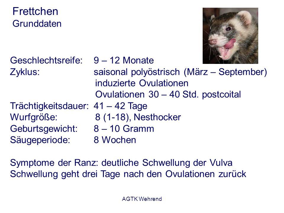 AGTK Wehrend Frettchen Grunddaten Geschlechtsreife:9 – 12 Monate Zyklus:saisonal polyöstrisch (März – September) induzierte Ovulationen Ovulationen 30
