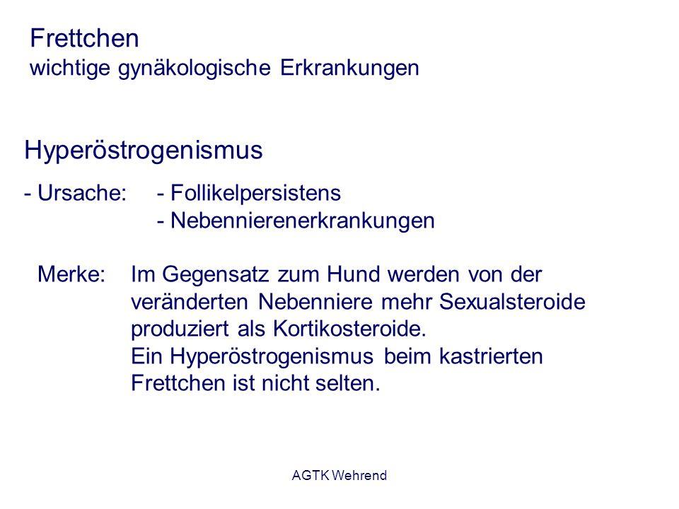 AGTK Wehrend Frettchen wichtige gynäkologische Erkrankungen Hyperöstrogenismus - Ursache:- Follikelpersistens - Nebennierenerkrankungen Merke: Im Gege