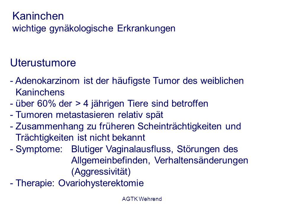 AGTK Wehrend Kaninchen wichtige gynäkologische Erkrankungen Uterustumore - Adenokarzinom ist der häufigste Tumor des weiblichen Kaninchens - über 60%