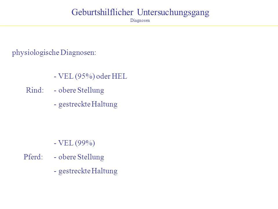 Geburtshilflicher Untersuchungsgang Diagnosen physiologische Diagnosen: Rind: Pferd: - VEL (95%) oder HEL - obere Stellung - gestreckte Haltung - VEL