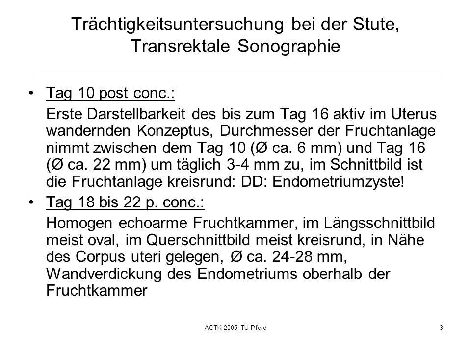 AGTK-2005 TU-Pferd3 Trächtigkeitsuntersuchung bei der Stute, Transrektale Sonographie Tag 10 post conc.: Erste Darstellbarkeit des bis zum Tag 16 aktiv im Uterus wandernden Konzeptus, Durchmesser der Fruchtanlage nimmt zwischen dem Tag 10 (Ø ca.