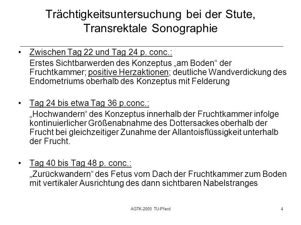 AGTK-2005 TU-Pferd4 Trächtigkeitsuntersuchung bei der Stute, Transrektale Sonographie Zwischen Tag 22 und Tag 24 p.
