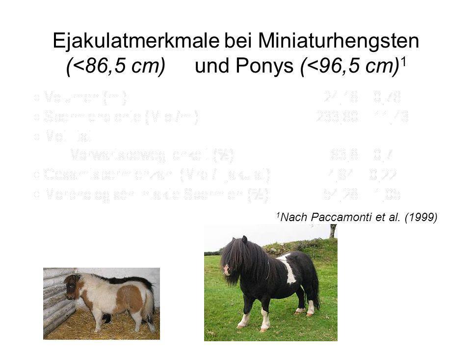 Ejakulatmerkmale bei Miniaturhengsten (<86,5 cm) und Ponys (<96,5 cm) 1 1 Nach Paccamonti et al. (1999)