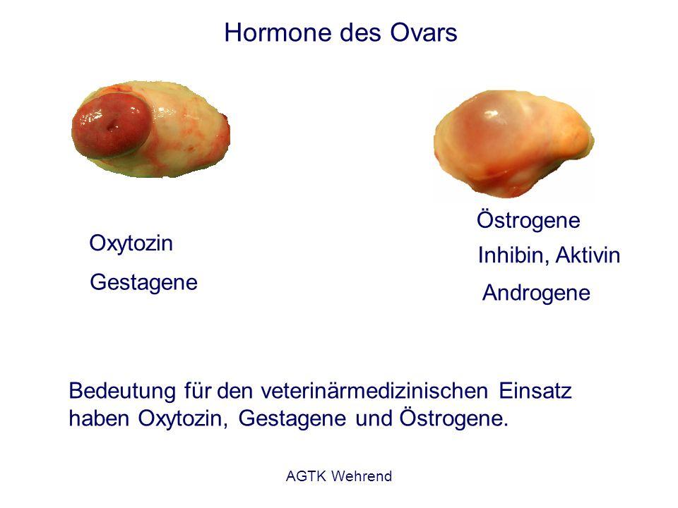 AGTK Wehrend Hormone des Ovars Östrogene Bedeutung für den veterinärmedizinischen Einsatz haben Oxytozin, Gestagene und Östrogene.