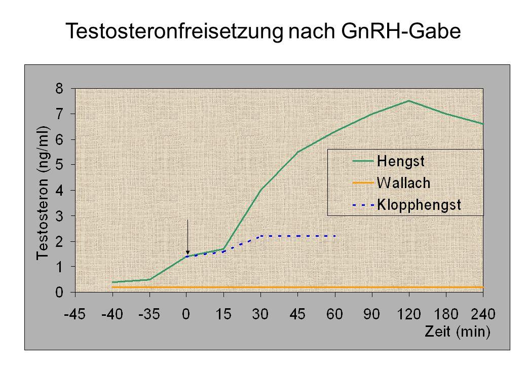 58 Testosteronfreisetzung nach GnRH-Gabe