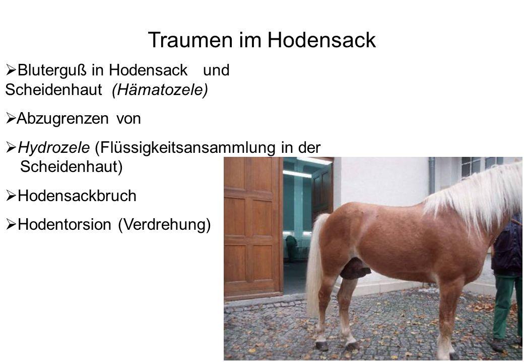 8 Traumen im Hodensack Bluterguß in Hodensack und Scheidenhaut (Hämatozele) Abzugrenzen von Hydrozele (Flüssigkeitsansammlung in der Scheidenhaut) Hod
