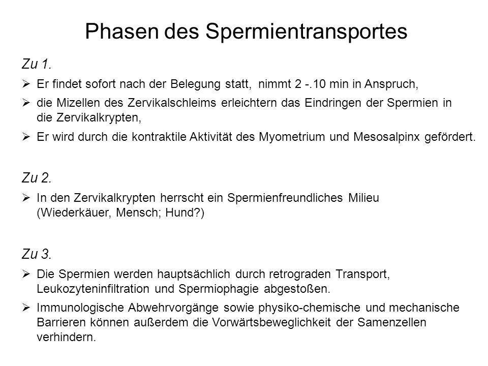 Phasen des Spermientransportes Zu 1. Er findet sofort nach der Belegung statt, nimmt 2 -.10 min in Anspruch, die Mizellen des Zervikalschleims erleich