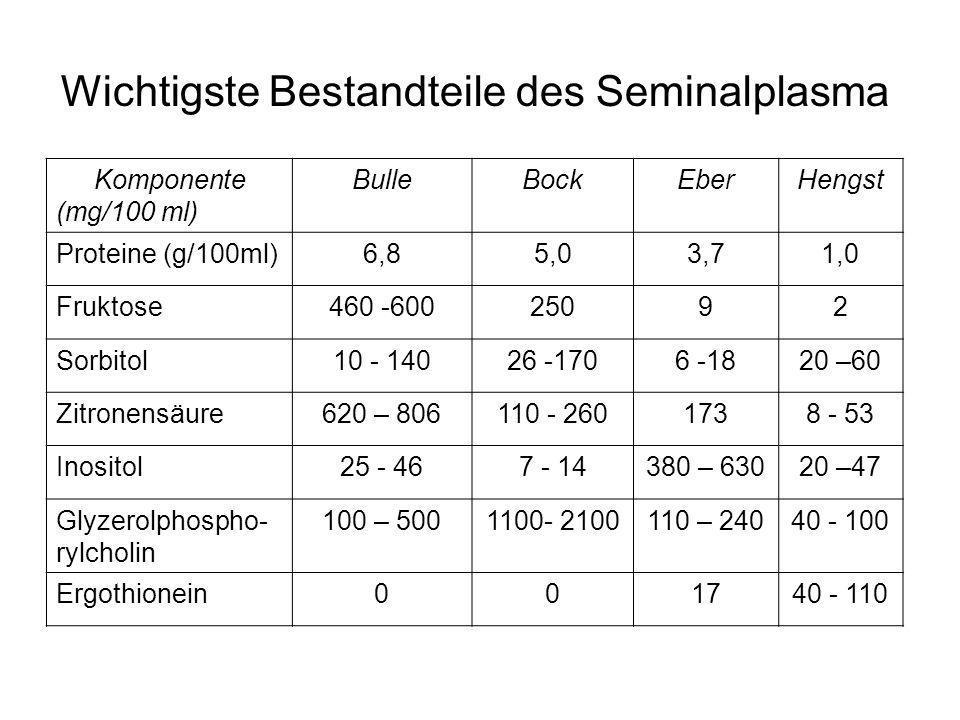 Wichtigste Bestandteile des Seminalplasma Komponente (mg/100 ml) BulleBockEberHengst Proteine (g/100ml)6,85,03,71,0 Fruktose460 -60025092 Sorbitol10 -