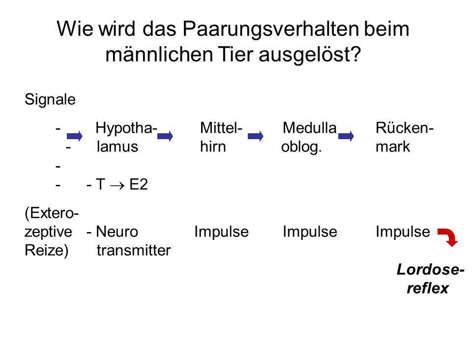 Signale - Hypotha-Mittel-MedullaRücken- -lamus hirn oblog.mark - -- T E2 (Extero- zeptive- Neuro Impulse Impulse Impulse Reize)transmitter Lordose- re